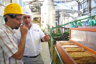 Checking raw sugar crystals quality at source in Guadeloupe, Caribbean.