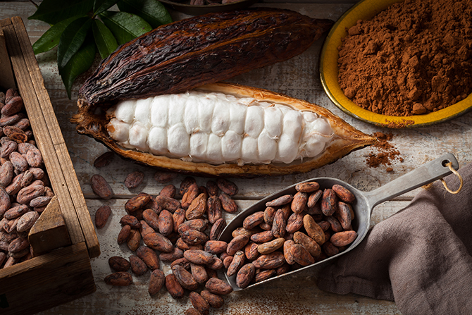 cocoa plant cacao and derivatives