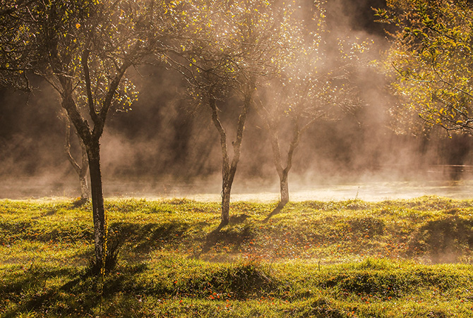 Picture of apple orchards with mist on